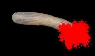 Forscher haben einen bizarren Tiefsee-Penis entdeckt. (Foto)