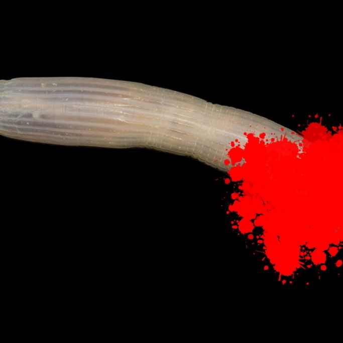 Tiefsee-Penis entdeckt! Ist diese Kreatur gefährlich? (Foto)
