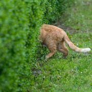 Vorsicht giftig! So wird Ihr Garten für Katzen sicher (Foto)