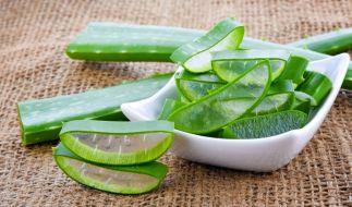 Aloe vera gehört zu den bekanntesten Heilpflanzen. (Foto)