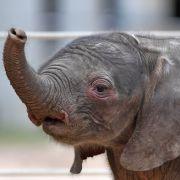 HIER wird ein Baby-Elefant aus einem Wassertank gerettet (Foto)