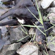 Grausam! Hündin getötet und im See versenkt (Foto)