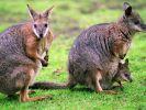 In Australien