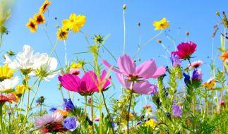 Im Sommer blühen die Gärten in all ihrer Pracht. (Foto)