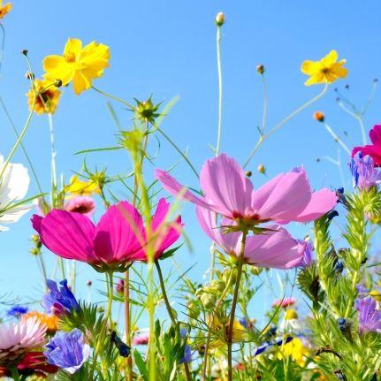 Sonne satt! So bleibt ihr Garten auch in der größten Hitze frisch (Foto)