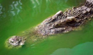 Ein Betrunkener ist einem Krokodil zum Opfer gefallen. (Foto)