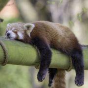 DIESE 6 Tipps verhelfen zu gutem Schlaf (Foto)