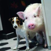 Mit Schwein und Hund der Liebe auf die Sprünge helfen (Foto)
