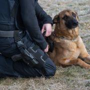 Weiße Polizisten hetzen Polizeihund auf Schwarzen (Foto)