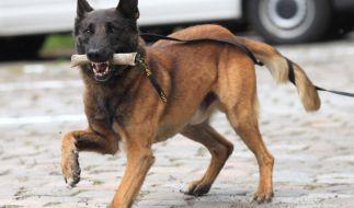 Bei der Bundespolizei arbeiten rund 40.300 Mitarbeiter und zirka 600 Diensthunde. (Symbolbild) (Foto)