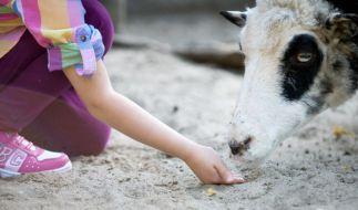 Nach einem Besuch im Streichelzoo ist eine Dreijährige gestorben. (Foto)