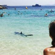Schon wieder! Urlauber von Blauhai angegriffen (Foto)