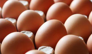 Verbraucher sind verunsichert, nachdem mit dem Insektizid Fipronil belastete Eier in den Handel gelangt sind (Symbolfoto). (Foto)