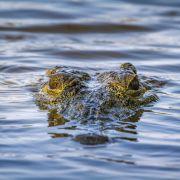 In DIESEM Krokodil steckt ein ganzer Mann (Foto)
