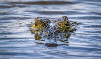 In Brasilien entdeckten Jäger eine komplette Männerleiche in einem Krokodil. (Foto)