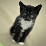 Unfassbar! Katzen in Bio-Tonne entsorgt (Foto)