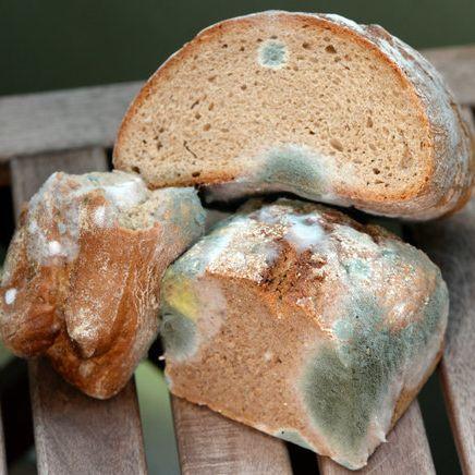 Müssen alle verschimmelten Lebensmittel in den Müll wandern? (Foto)