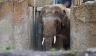 Im Leipziger Zoo wurde ein Tierpfleger offenbar von einem Elefanten verletzt. (Foto)