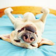 Widerlicher Hundesex bringt Ehepaar in den Knast (Foto)