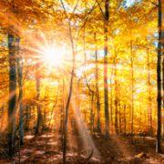 Sonniger Herbst? DAS sagt der 100-jährige Kalender voraus (Foto)