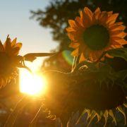 Azorenhoch im Anmarsch! SO stehen die Hoffnungen auf einen Altweibersommer (Foto)