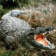 Britischer Journalist (24) von Krokodil totgemetzelt (Foto)