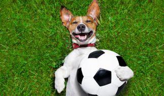 Ein Hund bewies in Argentinien sein Ballgefühl. (Symbolbild) (Foto)