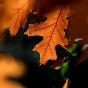 Der Herbst startet durch! Jetzt regiert die Jahreszeit der bunten Blätter (Foto)