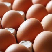 Gefahr durch Salmonellen! Eifrisch ruft Freiland-Eier (Foto)