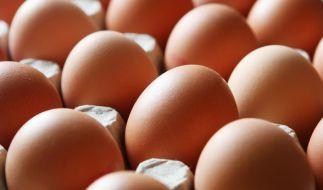 Lebensmittelwarnung! Eier der Firma Eifrisch sind von Salmonellen befallen. (Foto)