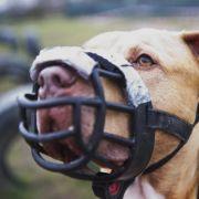 Horror-Hunde zerfleischen Griechenland-Urlauberin (Foto)