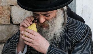 Ein orthodoxer Jude inspiziert eine Etrog. (Foto)