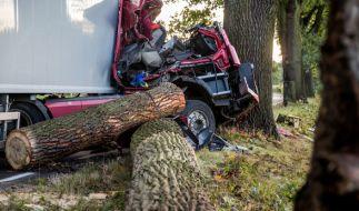 Ein LKW-Fahrer wurde in seinem Führerhaus von einem Baum erschlagen. (Foto)