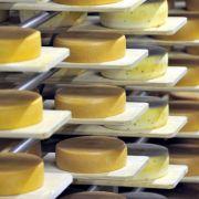 Nicht essen! Käse mit Salmonellen belastet (Foto)