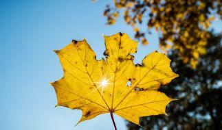 Meteorologen rechnen mit einem goldenen Oktober. (Foto)