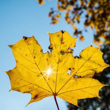 Goldener Herbst im Anmarsch! Wird es jetzt nochmal warm? (Foto)