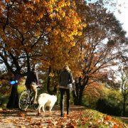 """Goldener Oktober! Hoch Tanja sorgt für """"Herbsthitze"""" (Foto)"""
