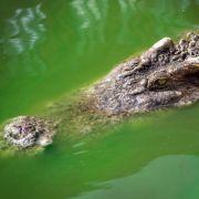 Rentnerin (79) von Krokodil gefressen (Foto)