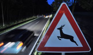 Im Herbst nehmen die Wildunfälle zu. (Foto)