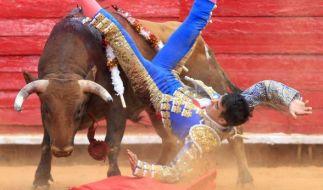 Der mexikanische Stierkämpfer Arturo Macias, hier bei einem Kampf im Februar 2014, wurde von einem Stier aufgespießt und schwer verletzt. (Foto)