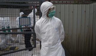 Das Vogelgrippe-Virus H7N9 könnte eine weltweite Pandemie auslösen (Archivbild). (Foto)