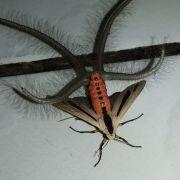 Was ist DAS für gruseliges ein Tentakel-Insekt? (Foto)