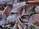 Ob der November wirklich grau und nass wird? (Foto)