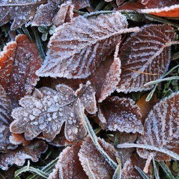 Schnee, Regen, Orkan? Das verrät der Hundertjährige Kalender (Foto)