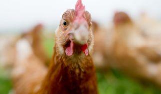 Die meisten Chicken-Nuggets im Handel haben nicht mehr viel mit dem eigentlichen Tier zu tun. (Foto)