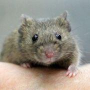 Krankes Video! Ladenbesitzer foltert wehrlose Maus (Foto)