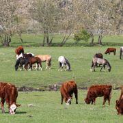 Kleines Mädchen (7) von Pony zu Tode geschleift (Foto)