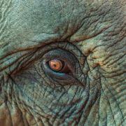 Hell is here! Männer-Mob zündet Elefanten-Baby an (Foto)