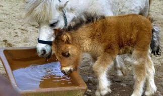 In aller Öffentlichkeit soll sich ein Mann in Berlin an einem Pony vergangen haben (Symbolbild). (Foto)