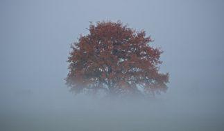 Auch in der kommenden Woche zeigt sich der Herbst von seiner ungemütlichen Seite. (Foto)